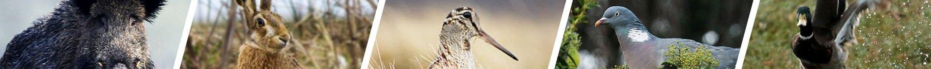 Κυνήγι Ιορδάνογλου